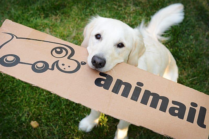 Animail – Lähin eläinkauppasi netissä