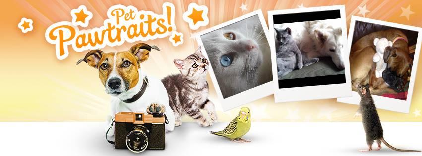 Zooplus – Lemmikkitarvikkeet edullisesti Saksasta